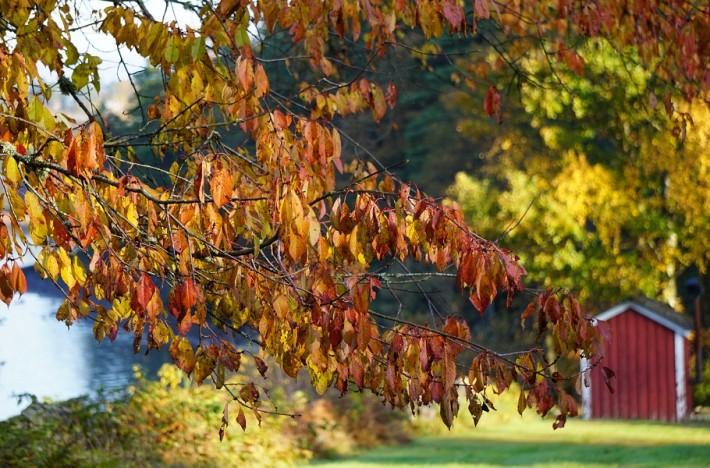 Höstdag vid en sjö med löv i förgrunden