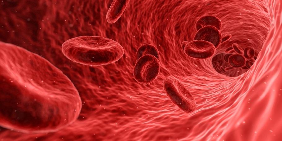 Röda blodkroppar i blodomloppet