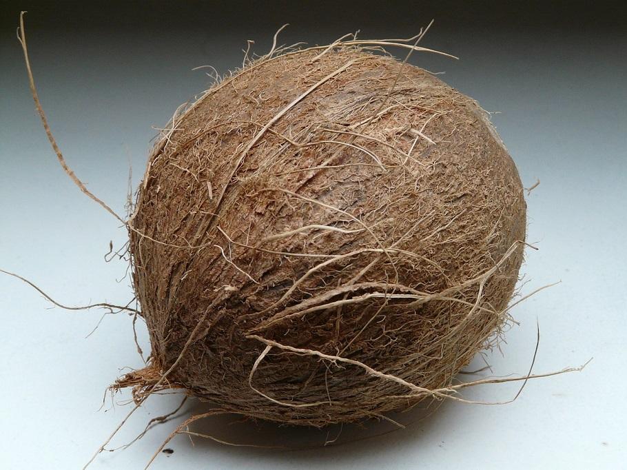 en hel kokosnöt